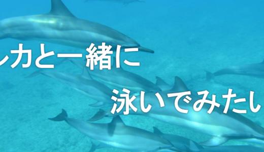 【ハワイ新婚旅行】野生のイルカとシュノーケリング!